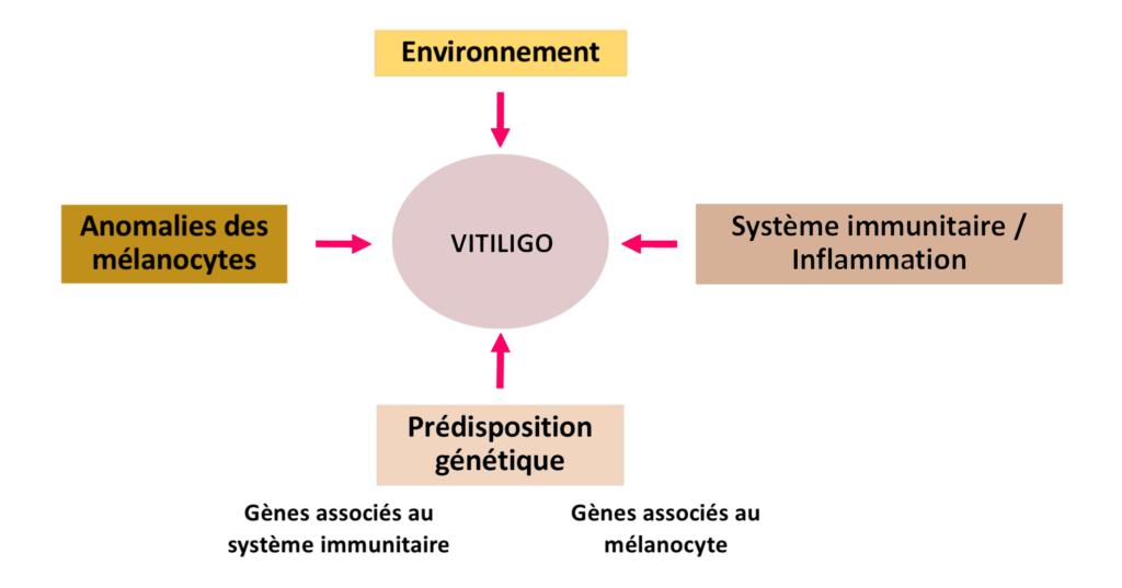 Vitiligo maladie multifactorielle